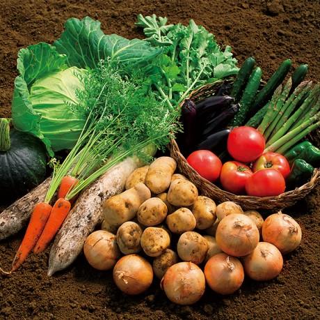 野菜画像-001